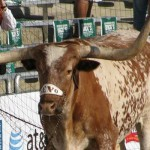 Bevo Photo Contest: And the Winner Is...