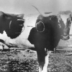 Thanksgiving 1916: The Bevo Tradition is Born