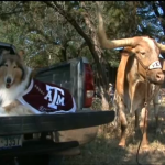 Bevo Hosts Reveille at Home for First Time Ever