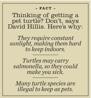 Turtle Fact