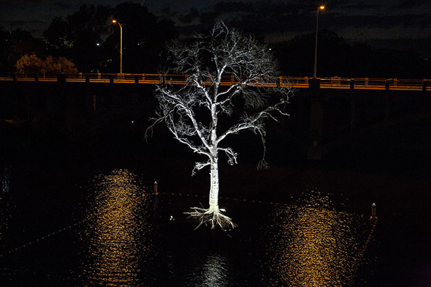 Ghost Tree Installed Above Lady Bird Lake
