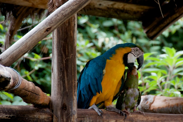 23. Parrot Buddies