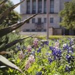 The Saga of the Maroon Bluebonnet Continues