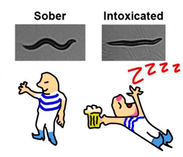 drunkwormsRESIZE