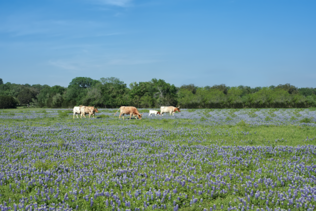 New Hogg Foundation Grant Will Focus on Well-Being in Rural Texas Communities